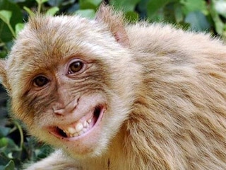 An inspirational story of monkeys with a moral,inspirational story in hindi,inspirational story in hindi for students, motivational stories in hindi for employees, best inspirational story in hindi, motivational stories in hindi language