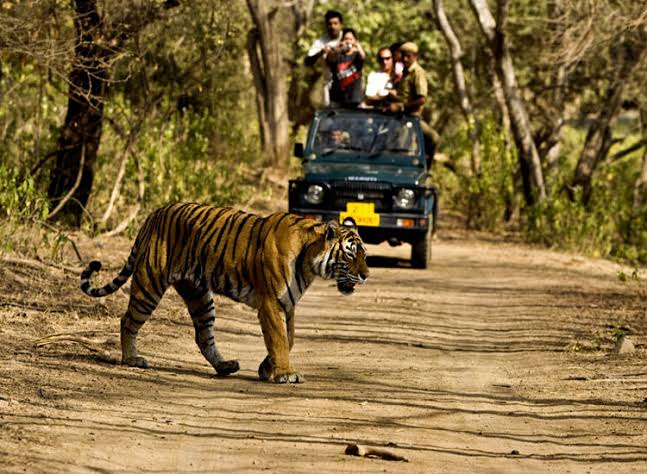 A new intresting hindi story from jungle safari,inspirational story in hindi,inspirational story in hindi for students, motivational stories in hindi for employees, best inspirational story in hindi, motivational stories in hindi language