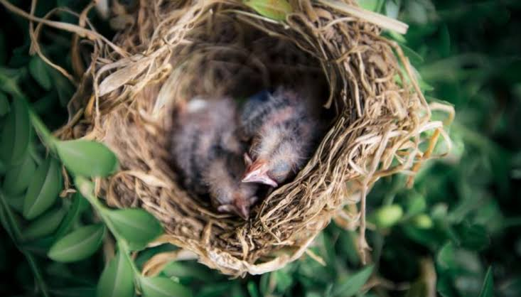 effect of company a new short inspirational story of bird and her childs,inspirational story in hindi,inspirational story in hindi for students, motivational stories in hindi for employees, best inspirational story in hindi, motivational stories in hindi language
